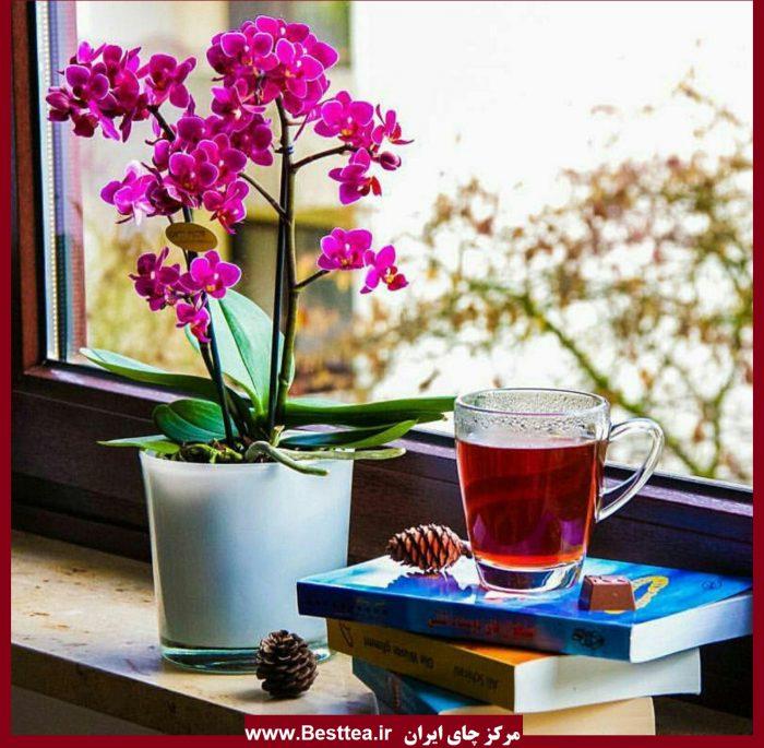 نمایندگی فروش چای دبش