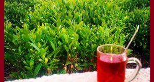 قیمت چای گروس در بازار