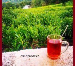 Photo of قیمت  چای گروس در بازار