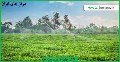 Photo of قیمت چای رفاه لاهیجان  درجه یک  از  درب  کارخانه