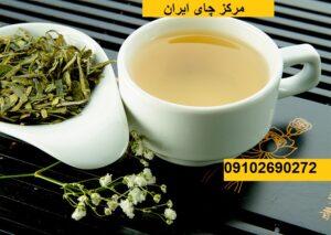 Photo of چای سبز ارزان قیمت از کجا تهیه کنیم؟